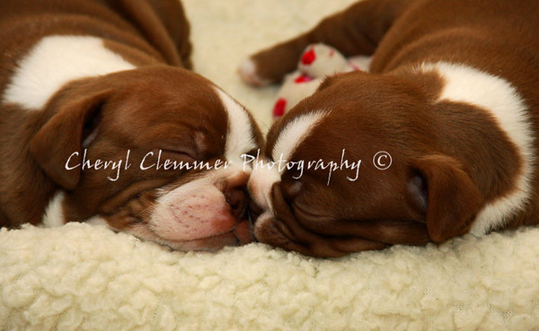 sleeping puppies 1
